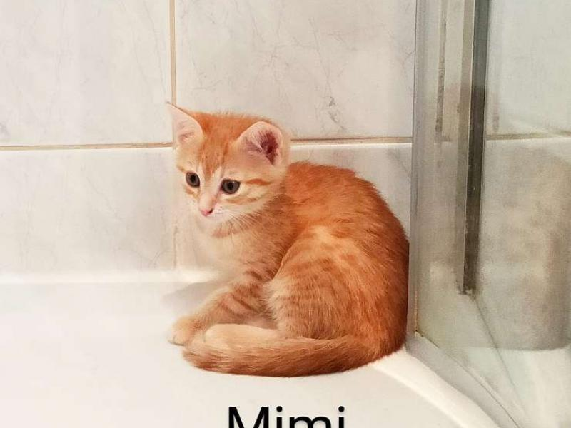Gratis baby steiermark katzen Eine Babykatze